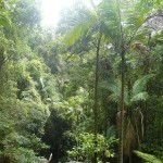 tropical rainforest walk