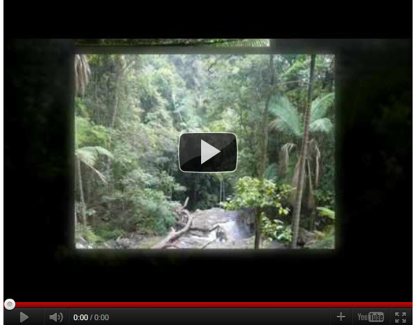 squidoo - youtube video rainforest