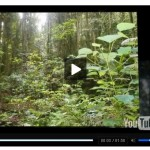 Easy Video Press: Video Player for WordPress Blogs